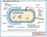 download bacteria_cell_wall_structure_2.jpg. bacteria_cell_wall_structure_2.jpg.